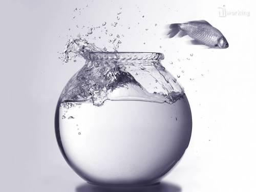 рыбка выпрыгивает из аквариума